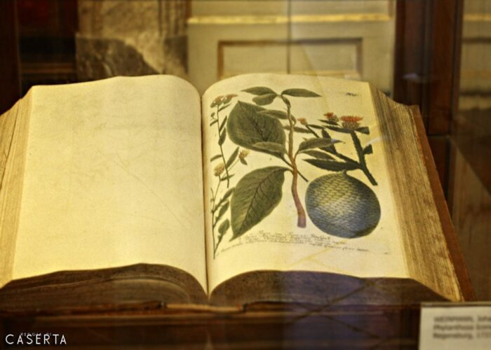 Biblioteca Libro 1 700x500, Unofficial Website of the Royal Palace of Caserta